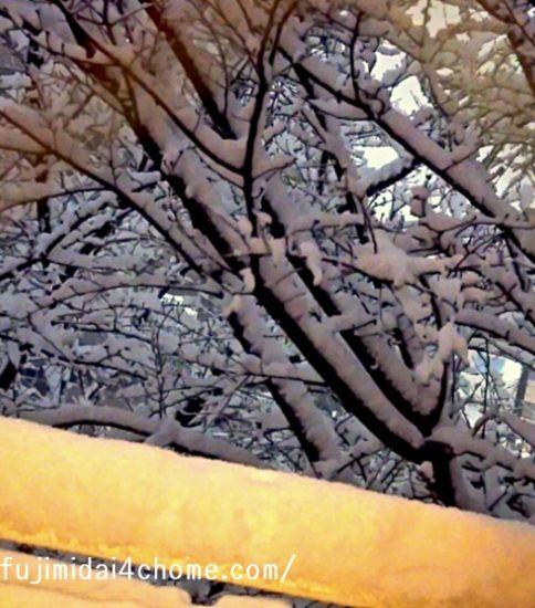 不謹慎ながらも、、、雪が積もってワクワク♪