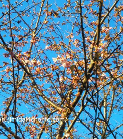 少しずつ春が近づいてきています